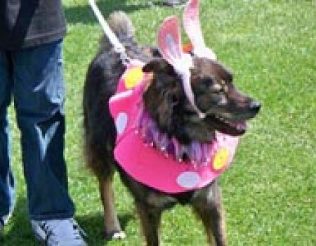 doggie-easter-bonnet